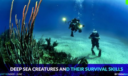 Deep sea creatures and their survival skills