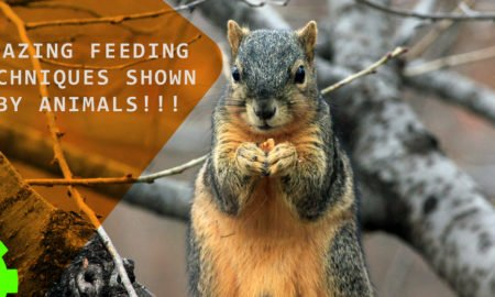 Amazing Feeding Techniques Shown By Animals!!!