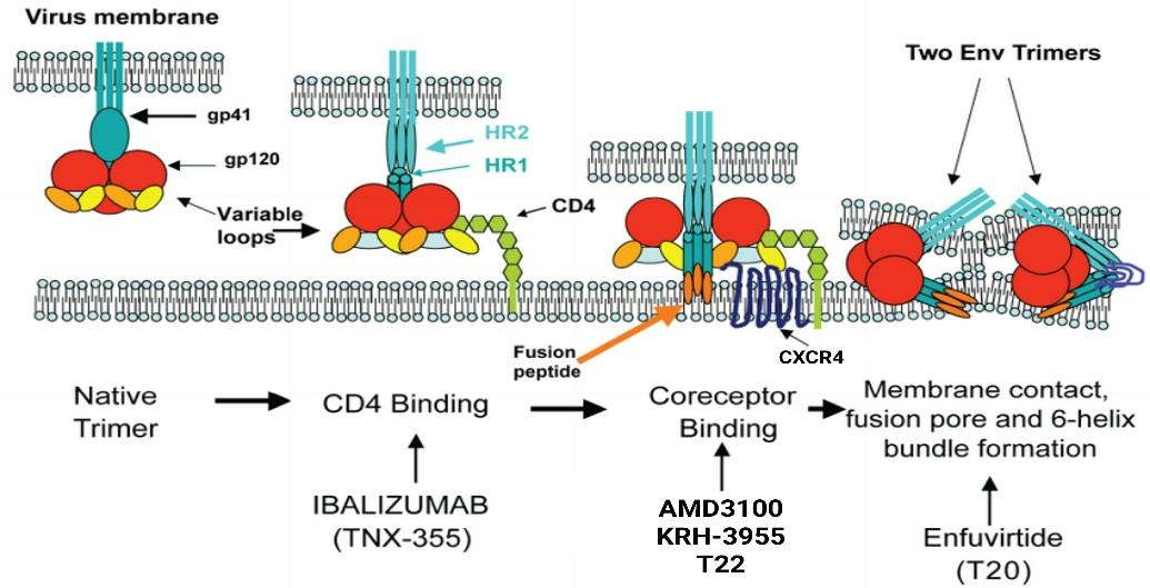 Therapeutic opportunities for inhibition of HIV-1 entry