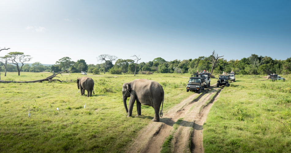Places to See Elephants in Sri Lanka