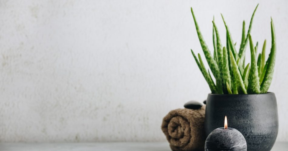 Reasons to Grow Your Own Aloe Vera Plant