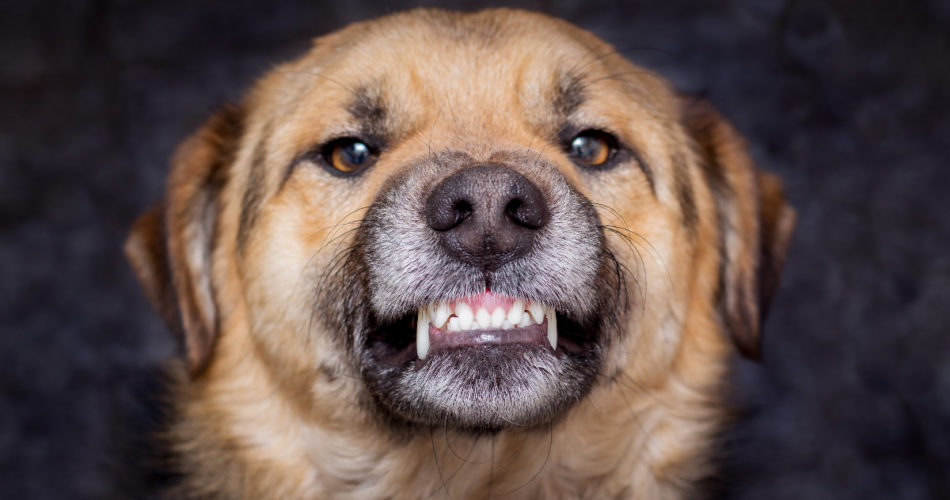 Super Simple Tips That Will Help Prevent Your Dog from Attacking Strangers