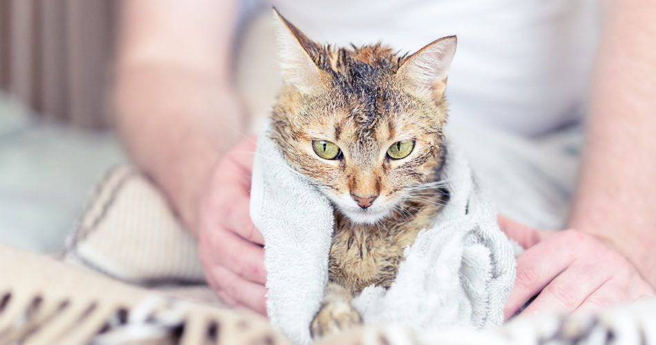 5 Best Pet Cleaning Wipes for Your Cat