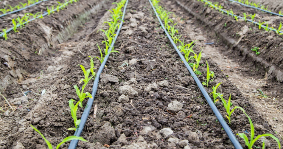 Quick Guide to Drip Irrigation