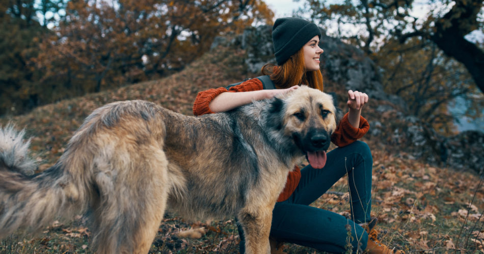 Traveling With a Pet in a Post Covid-19 World