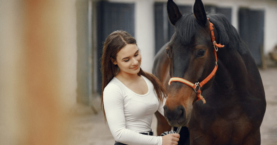 Want to Buy a Horse? Here's the Basic Horse Care Guide You Should Know by Heart