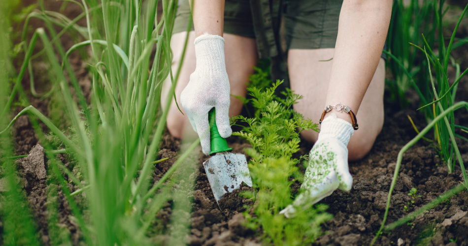 Common Gardening Mistakes You Might Want to Avoid