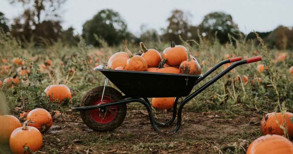 Things You Didn't Know About Pumpkin Business