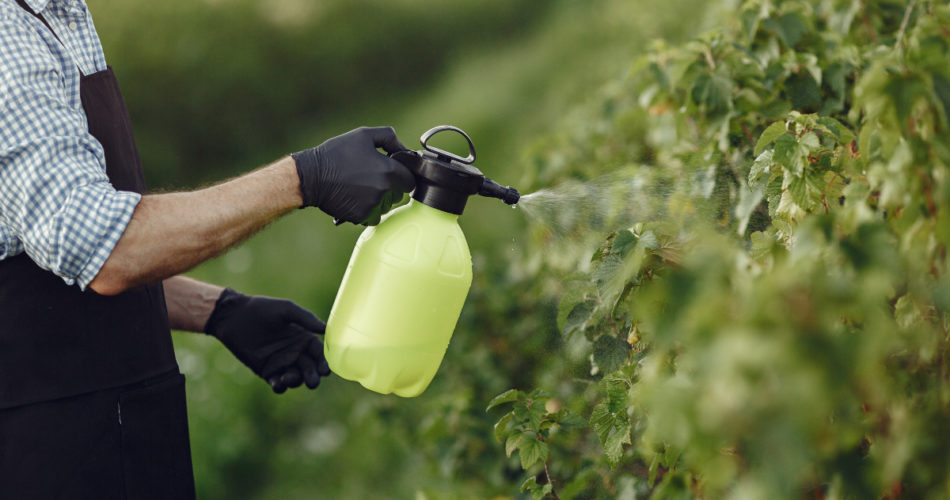 What Types of Chemicals Does Your Garden Need? Find Out Here